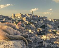 野良猫への餌やりに対する法律