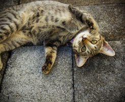 野良猫への餌やり問題の解決法