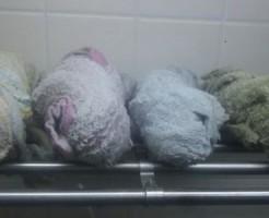 雑巾いっぱい